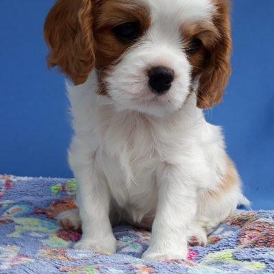 Hazel 6 Wochen