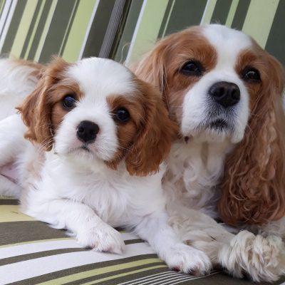 Gladdys und Hazel 6Wochen