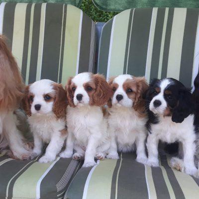 komplette Familie