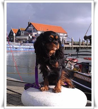 Mit 10 Monaten auf der schönen Insel Texel