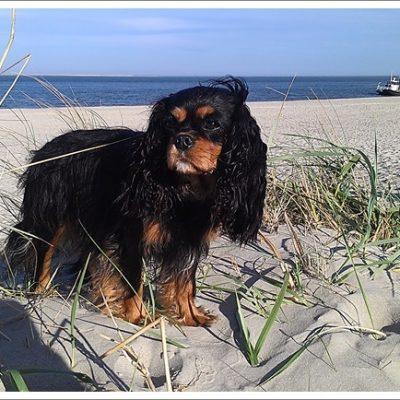 Daisy auf Texel  21 Monate