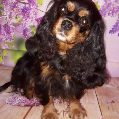 Daisy 4 Jahre