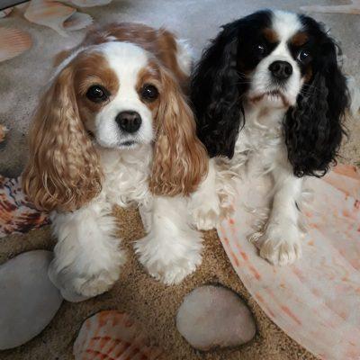 Gladdys 12 Jahre mit ihrer Vollschwester Lady 10 Jahre