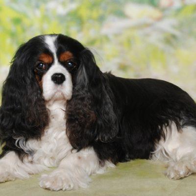 Unsere Daisy mit nun 13 Jahren.