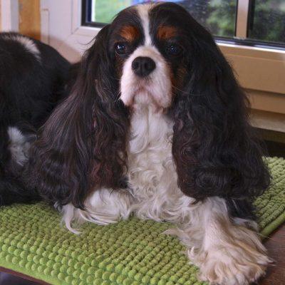 Daisy feierte am 26.03.13 ihren 11. Geburtstag!