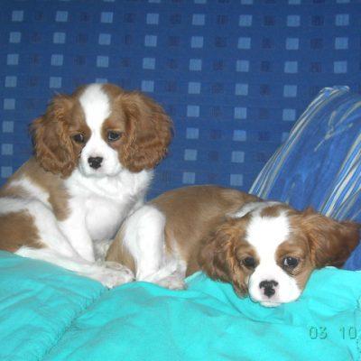 Bea und Belina 3 Monate